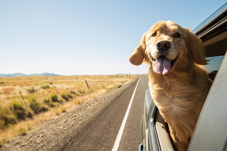 How and where to find good pet transporters